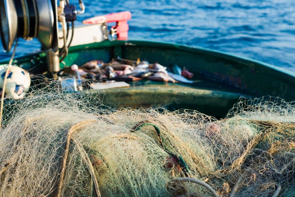 fish and sea lucy j hamilton