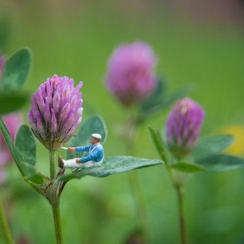 macro photography flower miniature Lucy j hamilton